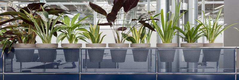USM Haller Pflanzenwelten im Empfangsbereich von Büros